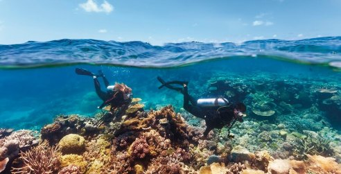 Great-Barrier-Reef-Tour-Diving